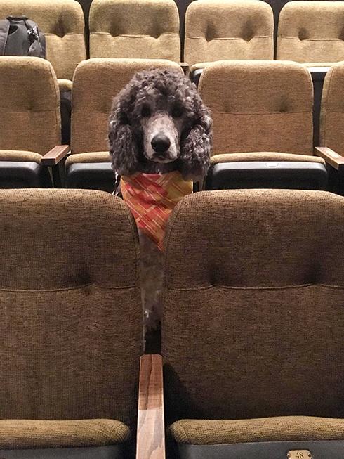 犬が劇場の椅子からひょっこり 介助犬訓練の様子だった