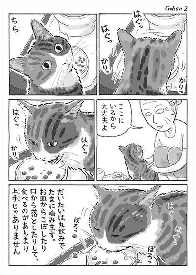 菊ちゃんの漫画