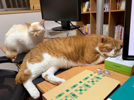 机で寝るしらたまさんとおまんじゅうさん