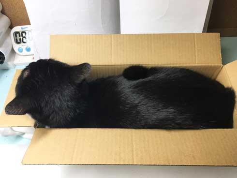 Amazon 箱 無双状態 猫 ダンボール お気に入り 猫ホイホイ 灘谷航