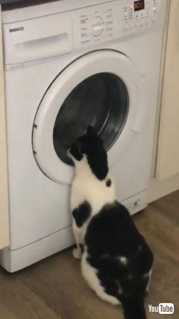 洗濯機大好きネコちゃん