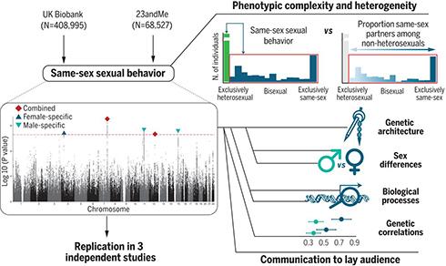 「同性愛は遺伝子だけで決まらない」 約47万人対象の研究結果を発表
