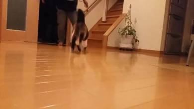 猫 ごまちゃん