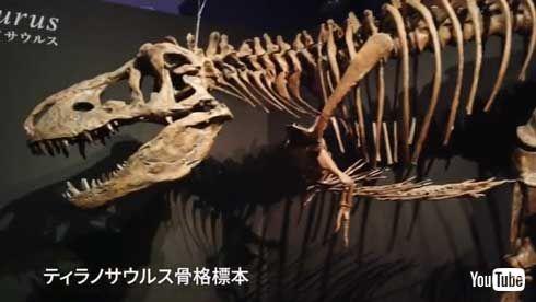 カムイサウルス・ジャポニクス むかわ竜 新属新種 恐竜 命名 ハドロサウルス科 北海道