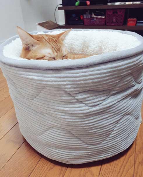 ニトリ ベッド お風呂でそのまま寝ちゃった子 猫 あお向け ピッタリ かわいい 天使