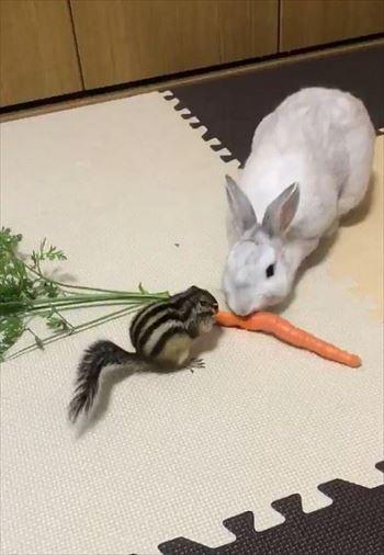 弱肉強食のリスとウサギ
