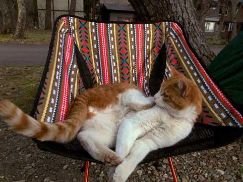 キャンプ場 出会った 猫 野良 テント 椅子 一緒 寝る かわいい