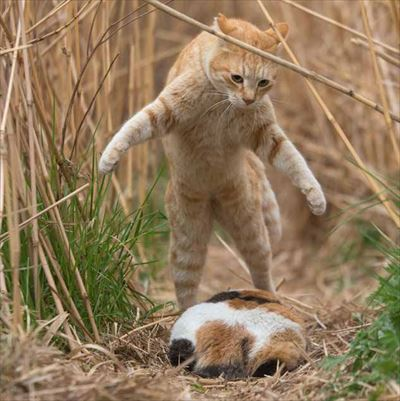 必死すぎるネコ〜前後不覚篇〜