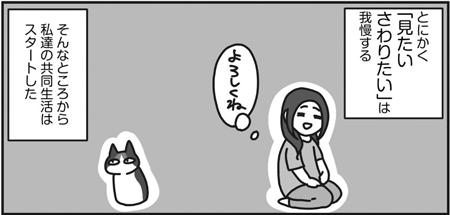 おたべ『三毛猫ふうちゃんは人見知り』