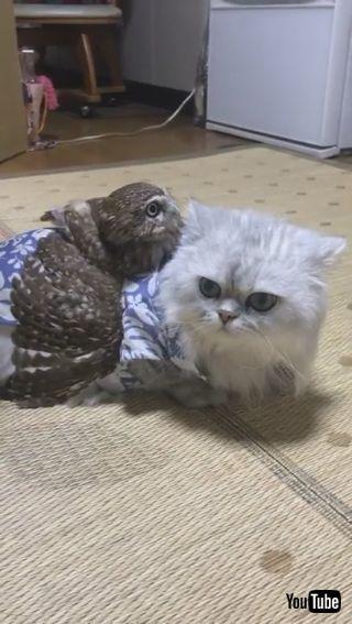 ネコちゃんとフクロウさん