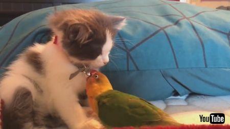 うとうとネコちゃんと鳥さん