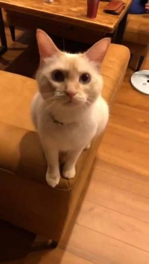 猫 ミレット君 猫語
