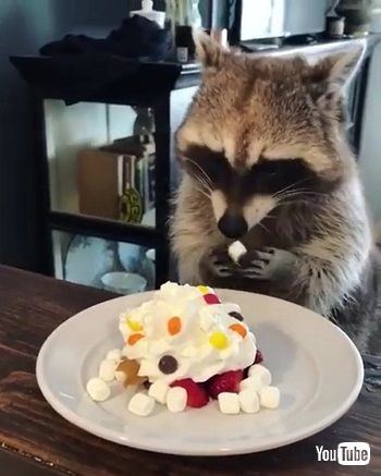 gets a sweet treat