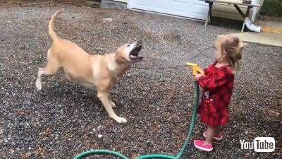 Tries to Bite
