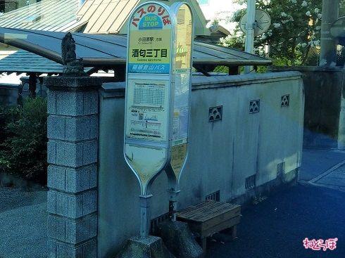 実際の「酒匂三丁目」。箱根登山バスのバス停と神奈中のバス停が並んでいます