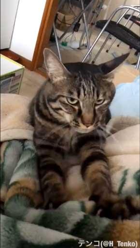 猫 作業 机 乱入 画面前 スペース トレイ 設置 監視 気に入る 逆転の発想 アイデア