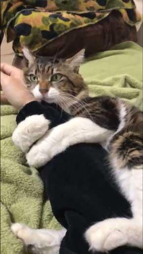 ヤマダ 猫 犬同様 人間に強い愛着を抱いている 判明 飼い主 腕 ハグ 抱きしめる