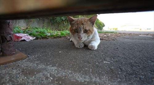 CaTuber猫たかDさん