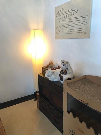 京都町家猫カフェ