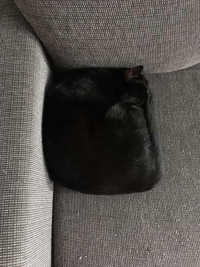 猫 未だかつてない 四角 クッション 座布団 黒猫 square
