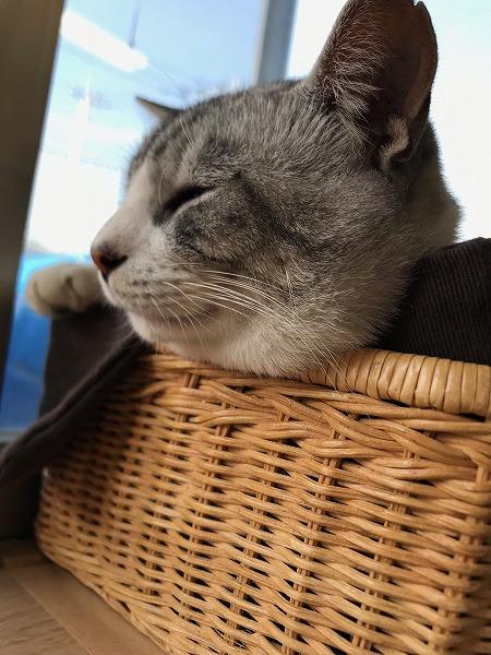 会社の重鎮と化した猫ちゃん