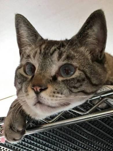 猫 チャムちゃん ニャンドバッグ