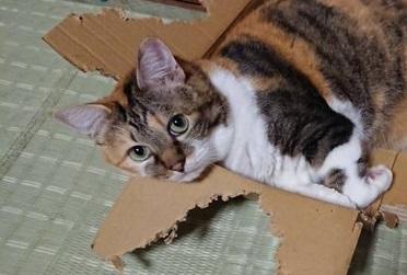 箱になってない猫