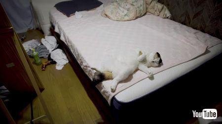 ベッドの上で寝る猫