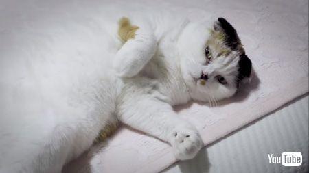 ベッドの上で寝る猫アップ