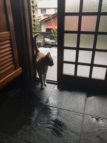 猫が雨宿り