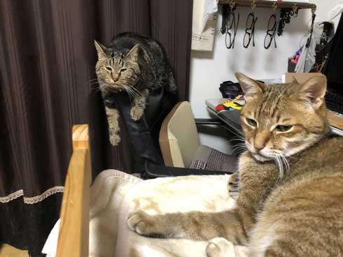 変な座り方 体育座り 猫 イサム ハマジ 表情 仲間 うちも