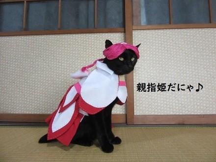親指姫のコスプレをする猫ちゃん