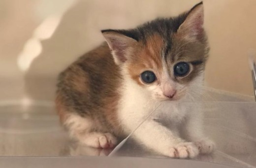 ペット手帳 猫ちゃん 綿棒 耳掃除