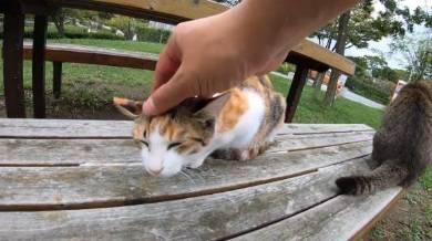 野郎が撮った猫動画さん 猫カフェベンチ