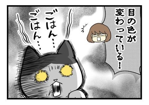 最近のよくわからない猫の儀式1
