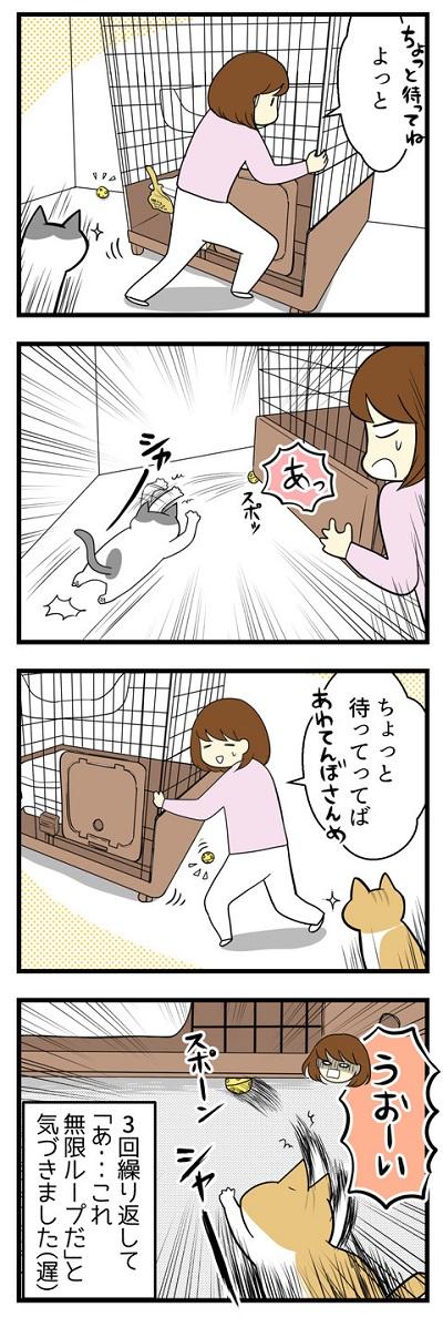 我が家の猫にヒット☆おもちゃで無限ループ2