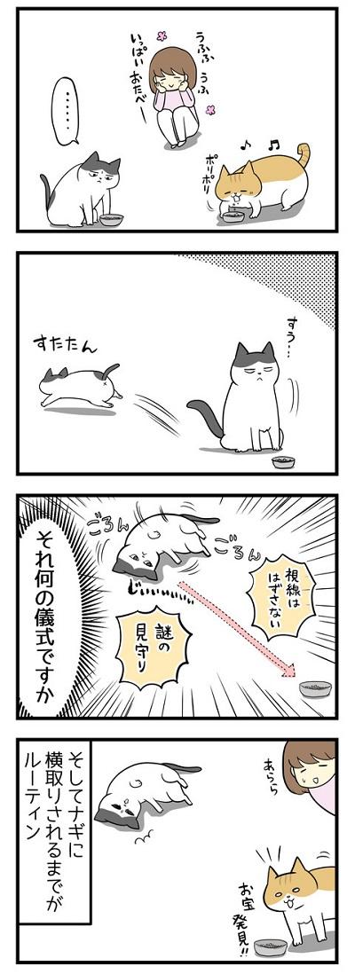 最近のよくわからない猫の儀式2