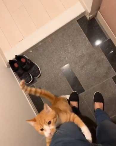 飼い主 出迎え 猫 飛びつき 甘え 抱っこ