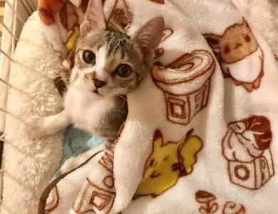 うりちゃん 猫 パネルヒーター