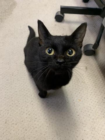 終末 黒猫