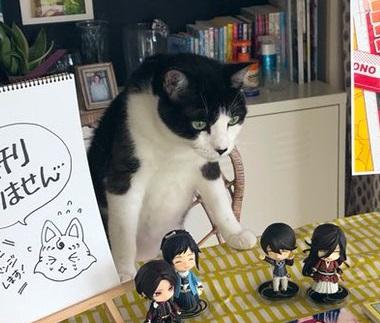 売り子猫 ミーくん