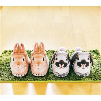 ホッキョクウサギの足が伸びるポーチ