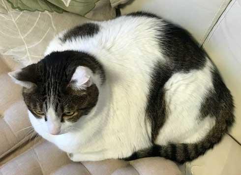 フェリシモ アザラシ クッション 猫 どっち 比較 似てる もちもち