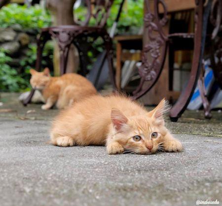 ぺたん寝子猫