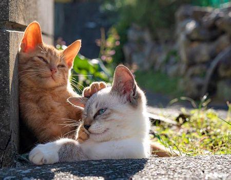 頭をなでる猫1