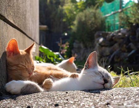 頭をなでる猫2