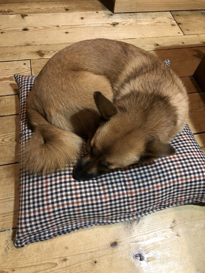 座布団で寝る春ちゃん
