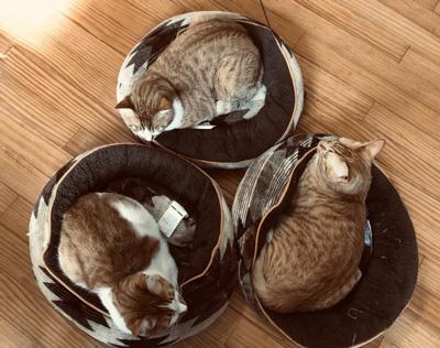 リサイクルマーク猫