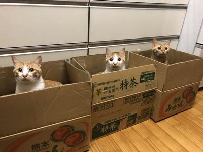 段ボール3猫