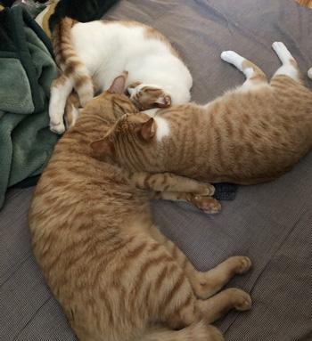 扇風機3猫